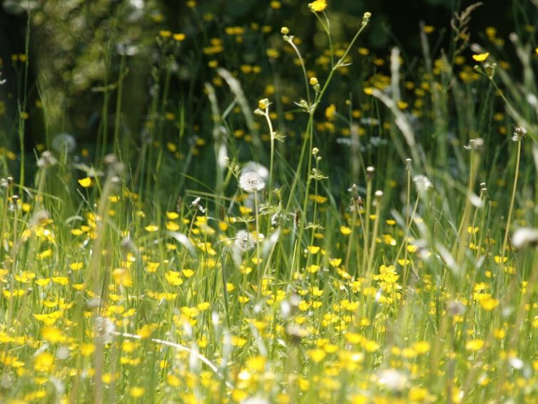 Allergitest förhindrar onödiga reaktioner